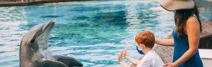 Dolphin Encounter Tour